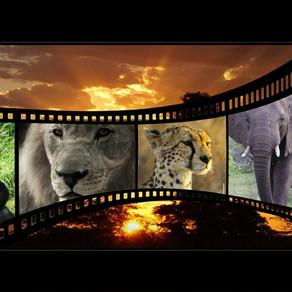 21 Filmes Infantis sobre o Respeito e o Amor à Natureza