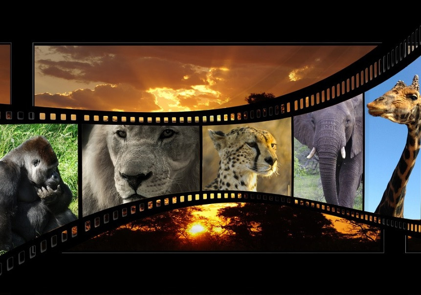 Filmes em cartaz sobre natureza | Foto Pixabay