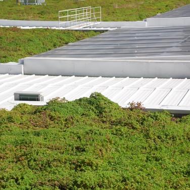 Telhado Verde   Planta Boldo