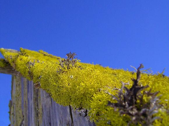 Telhados Verdes | Catálogo de Plantas do Site Dimensão da Natureza
