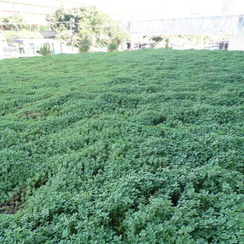 Telhado Verde | Garagem Subsolo | Planta Boldo
