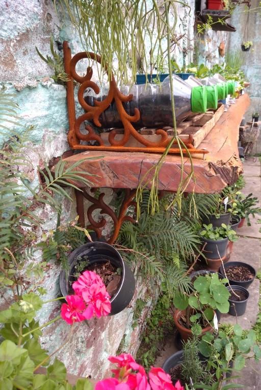 Horta em vasos reciclados suspensa em tábua de madeira | Foto Robriane Lara ©