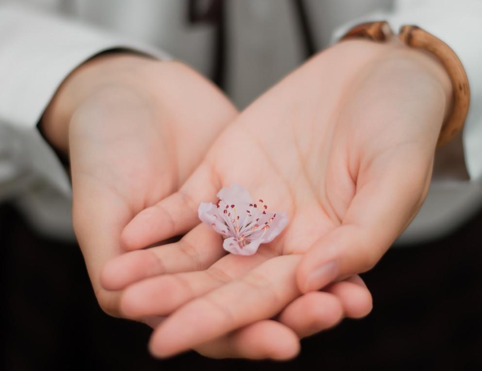 Mãos que aplicam Reiki | Foto Pexels