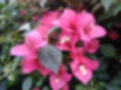 Arbustos e Semi-lenhosas | Catálogo de Plantas do Site Dimensão da Natureza