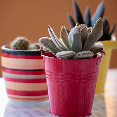 Suculentas em vasos coloridos