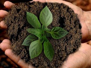 10 Maiores ONGs Ambientais que atuam no Brasil