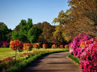 A Arte de Planejar um Jardim
