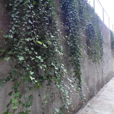 Jardim Vertical | Hera-inglesa