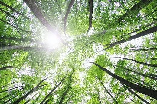 Blog Ambiente Natural | Copa das Árvores | Fique em Harmonia com o Meio Ambiente