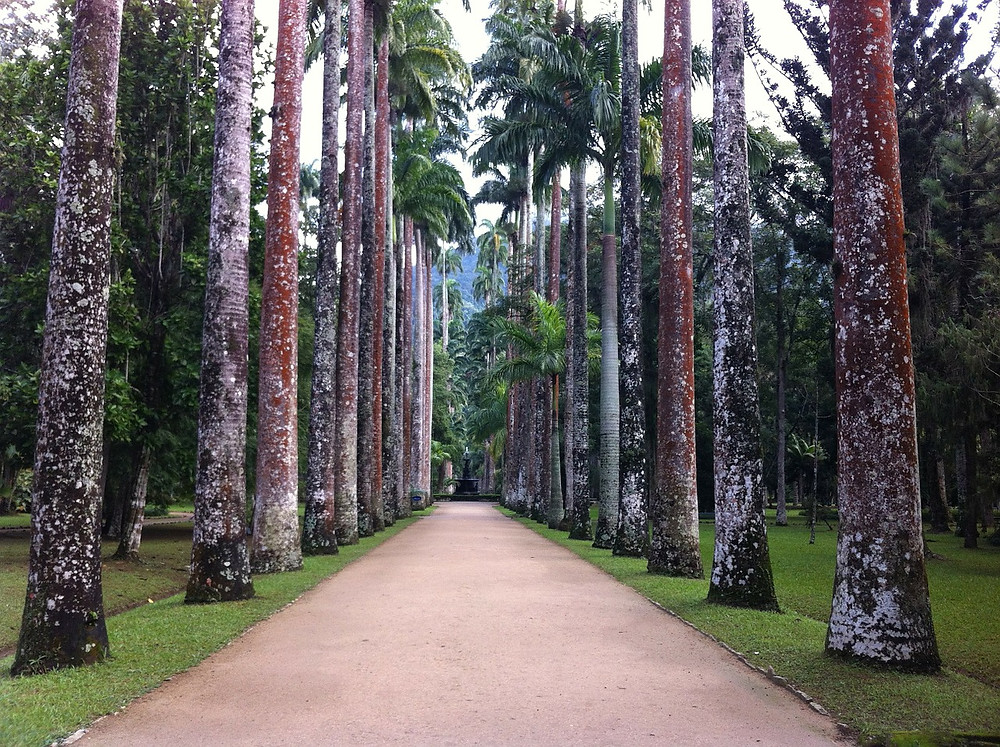 Jardim Botânico no Rio de Janeiro | Foto Pixabay