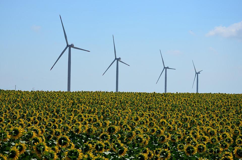 O Que É Sustentabilidade Ambiental | Foto Pixabay