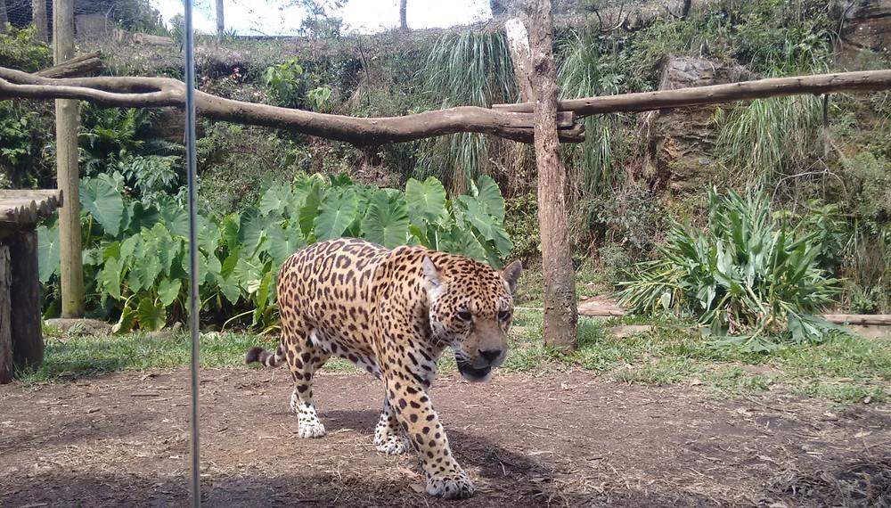 Zoológico de Gramado/ RS | Foto Robriane Lara ©