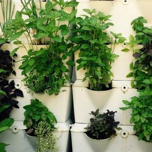 Como fazer uma Horta em Jardineiras