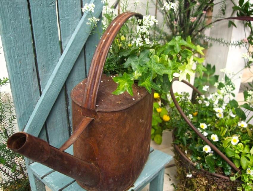 Regador vintage com plantas | Foto Pixabay