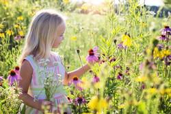 Colhendo Flores | Foto Pixabay