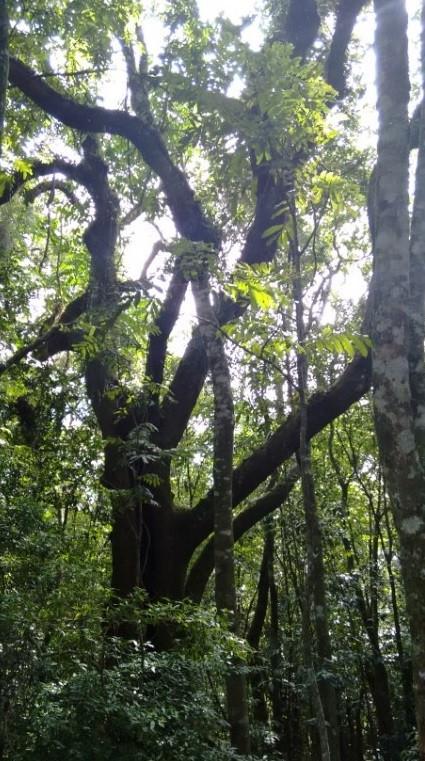 © Árvores da floresta | Foto de Robriane Lara
