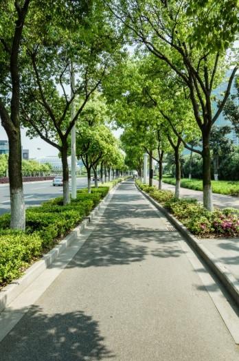 Ciclovia arborizada | Foto FreePik