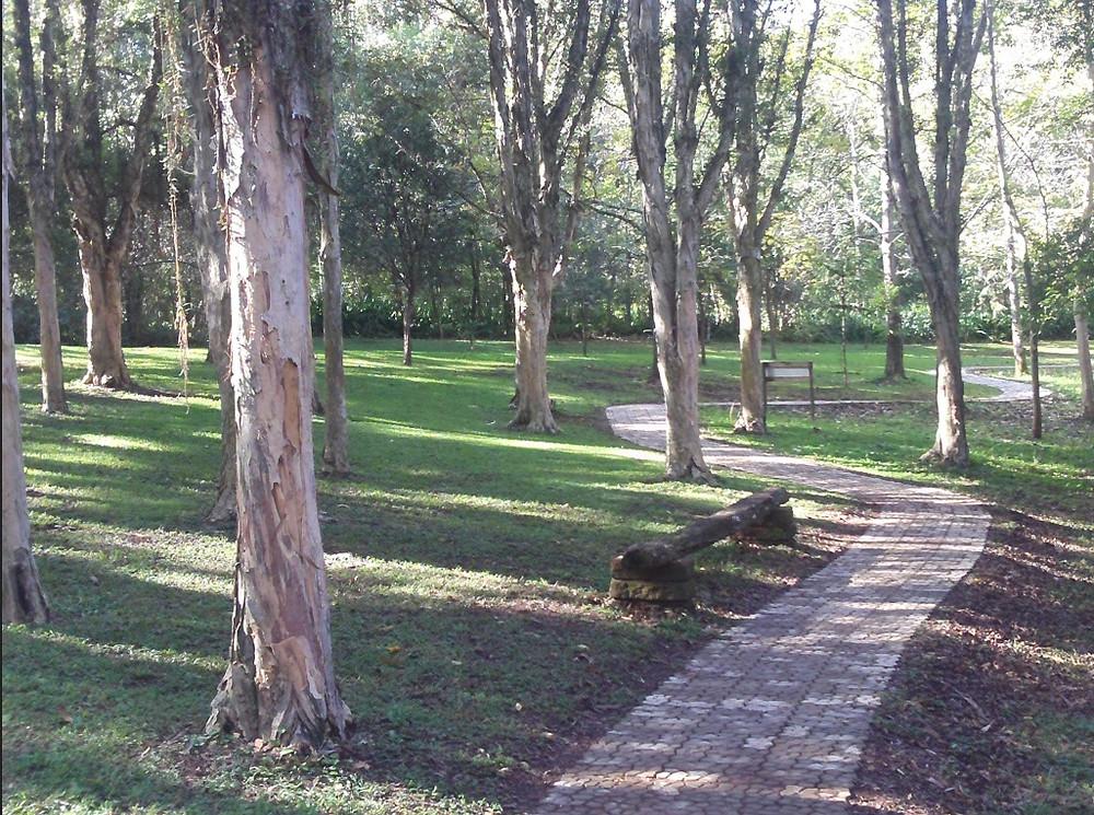 © Parque Witeck Caminho Bosque das Melaleucas   Foto Robriane Lara