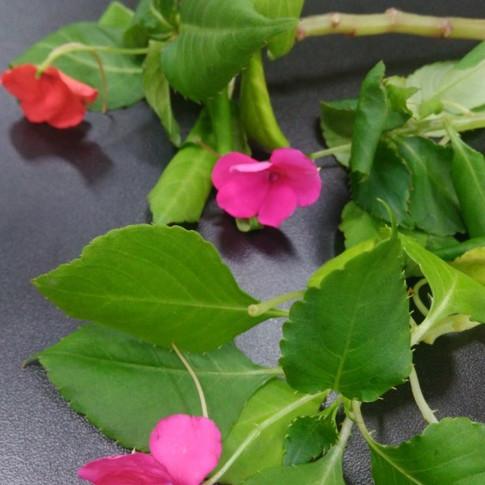 Flor do Beijinho