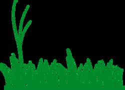 Graminha Verde