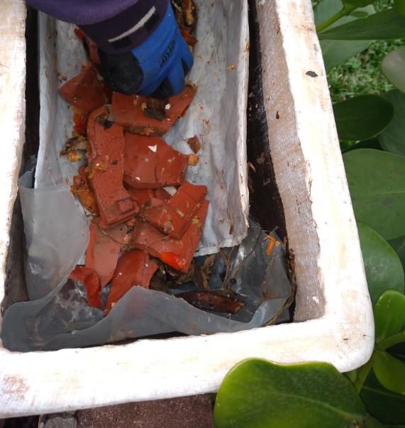 Camada de cacos de cerâmica para drenagem do vaso da horta | Foto Robriane Lara ©