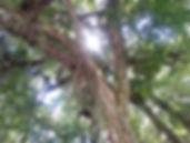 Árvores | Catálogo de Plantas do Site Dimensão da Natureza