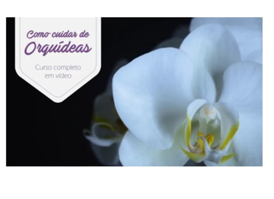 Orquídeas: Curso Completo em Vídeo + Manual Completo