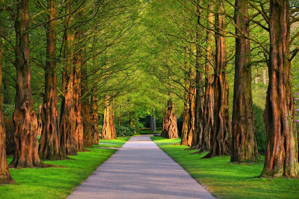 Caminho ladeado por árvores | Foto Pixabay