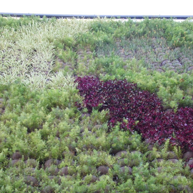 Jardim Vertical | Clorofito | Trapoeraba-roxa | Aspargo