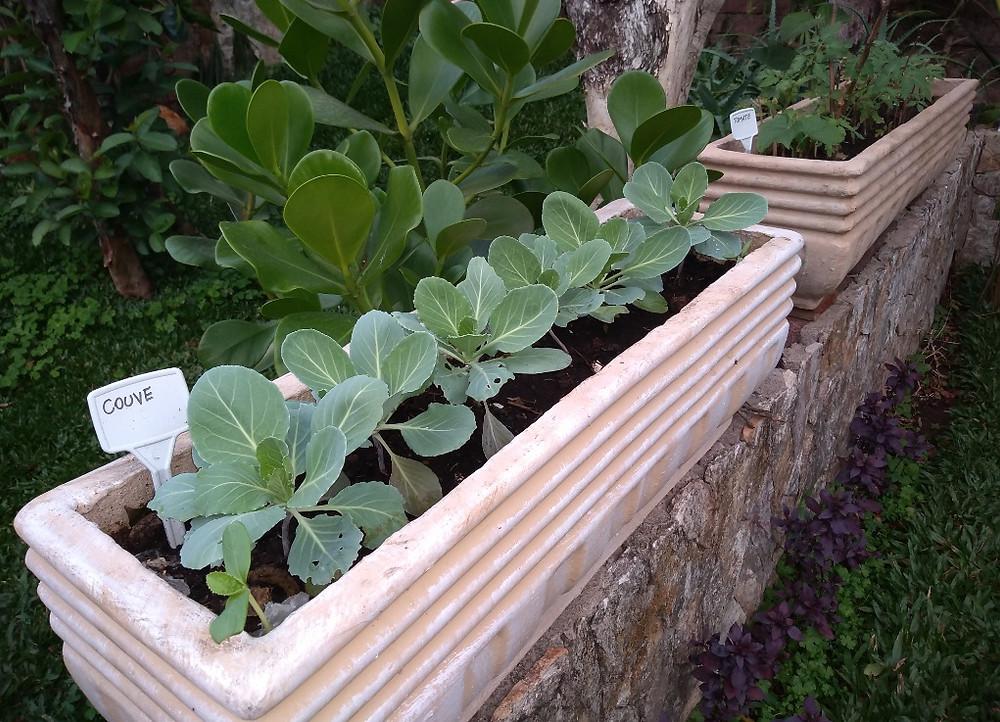 Horta em Vasos de concreto sobre mureta com couve e tomate | Foto Robriane Lara ©