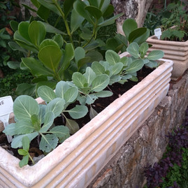 Horta em Vasos como Terapia da Jardinagem