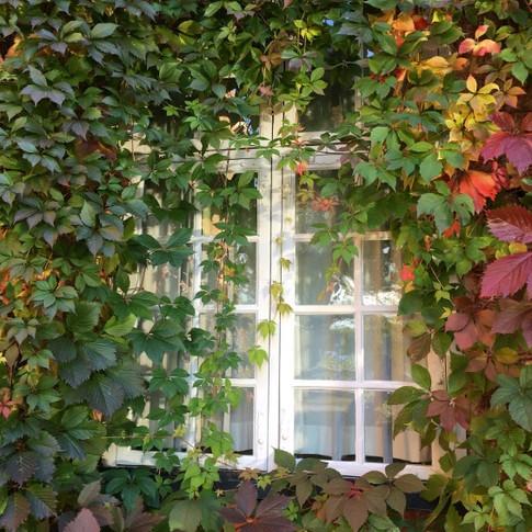 Jardim Vertical envolvendo a janela