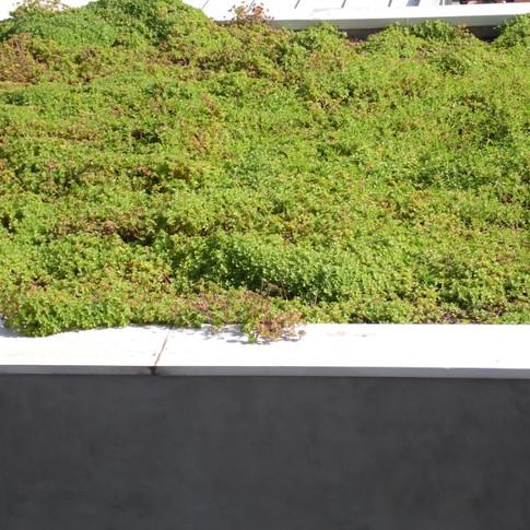 Platibanda com Telhado Verde | Planta Boldo