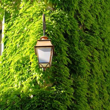 Jardim Vertical | Hera-japonesa