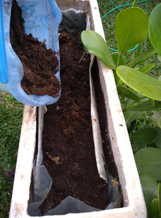 Preparo do composto do solo com terra orgânica | Foto Robriane Lara ©