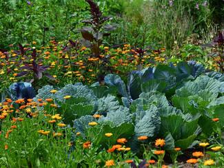 Benefícios da Horta Urbana