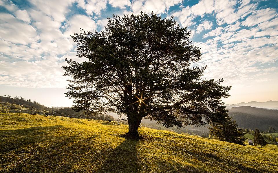Árvore frondosa no campo com céu azulado | Foto Pixabay