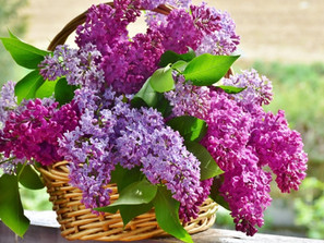 Terapias Florais: a Cura pelas Flores