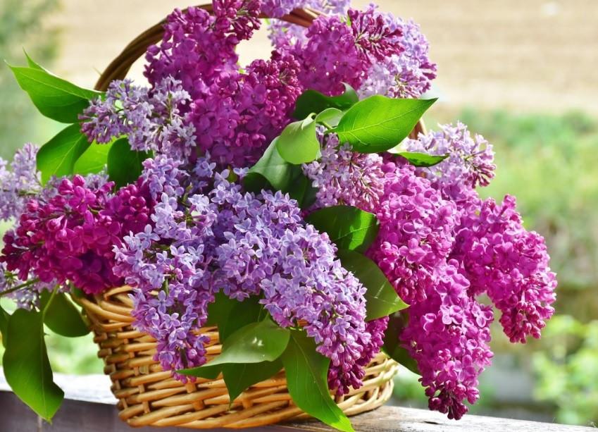 Cesto de flores perfumadas | Foto Pixabay