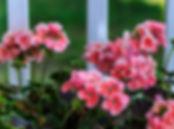Herbáceas | Catálogo de Plantas do Site Dimensão da Natureza