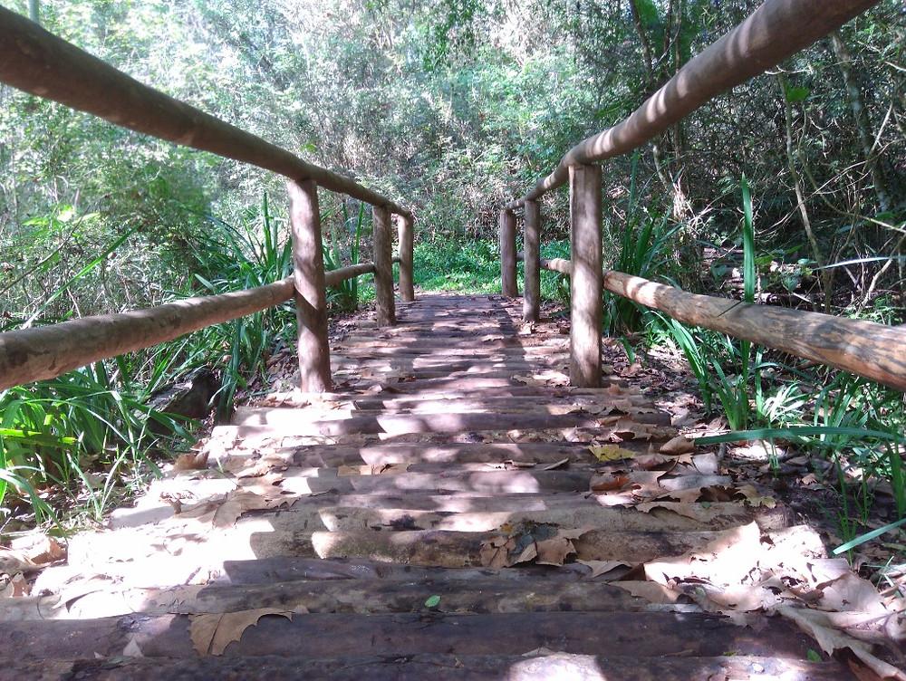 © Parque Witeck Ponte das Cigarras   Foto Robriane Lara