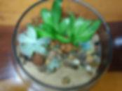 Mini Jardins e Terrários | Catálogo de Plantas do Site Dimensão da Natureza