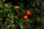 berries-938699_1920.jpg
