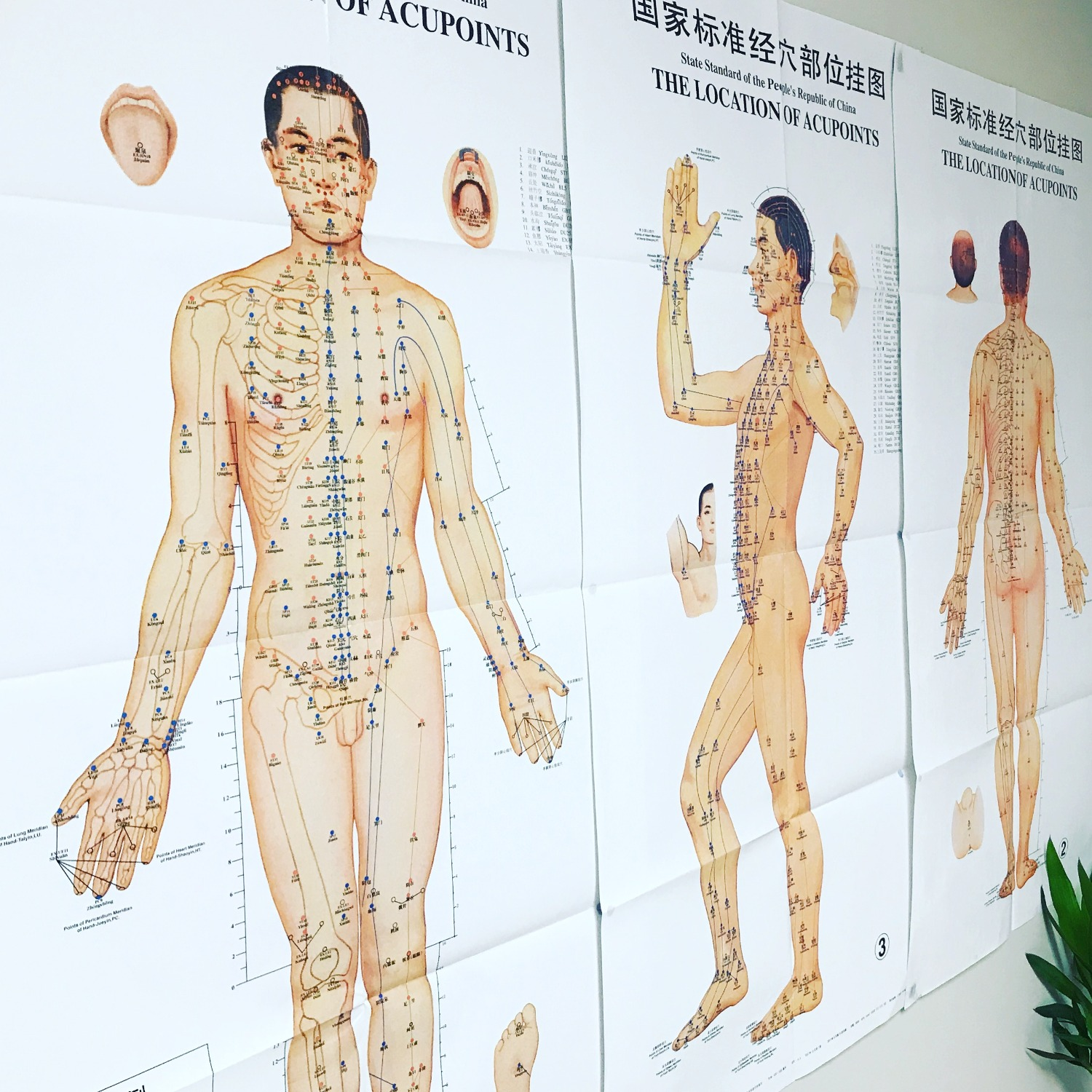 Acupuncture points + Channels