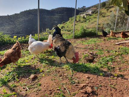 Logeren bij Belgen in Andalusië