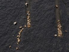 Scars of a seawall.jpg
