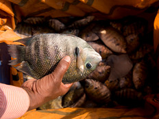 Selling fish.jpg