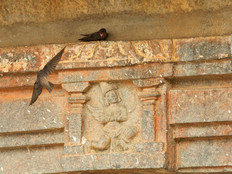 Swallows in a temple.jpg