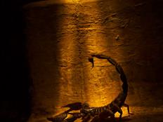 Scorpio in spotlight.jpg