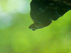 Reflection of a toad.jpg